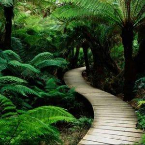 Chemin dans la jungle